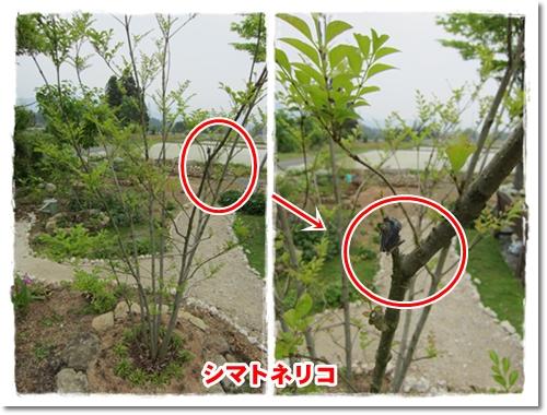 2012・5・18・日干しカエル-1