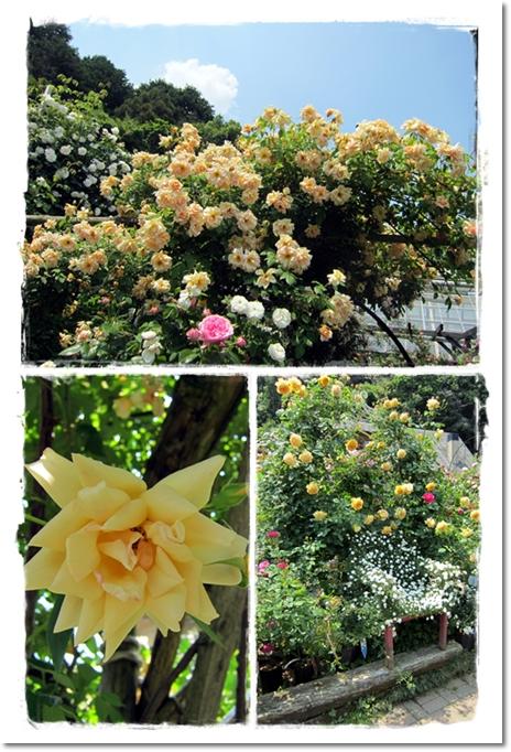 2012・5・27・松尾園芸ー3