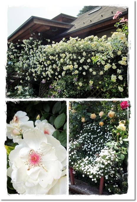 2012・5・27・松尾園芸ー2