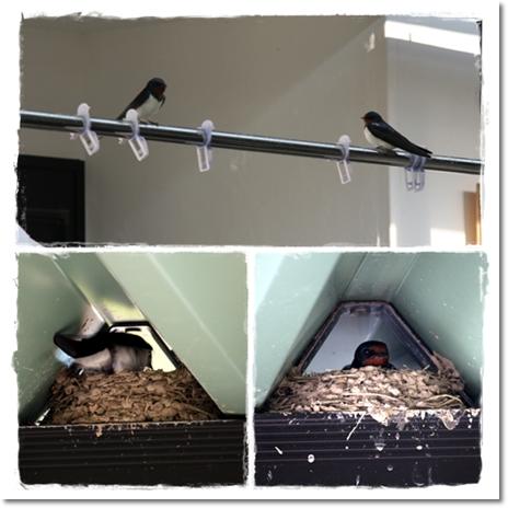 2012・6・8・ツバメの巣