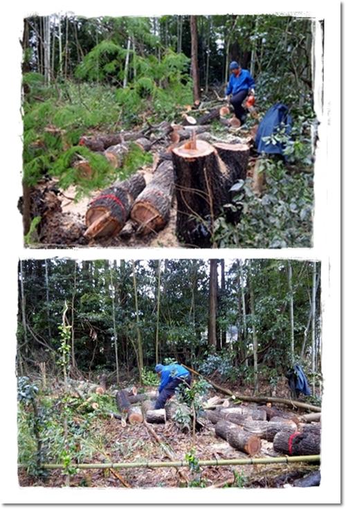 2012・11月・伐採
