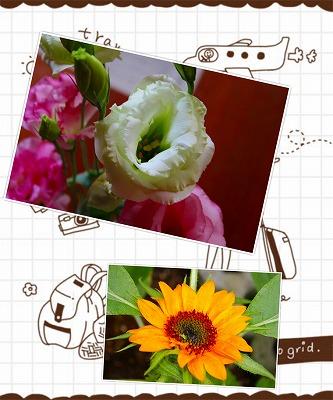 PhotoGrid_1339651997209.jpg