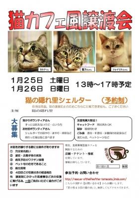 猫カフェ風譲渡会