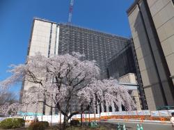 新総合教育棟と出発の庭の桜