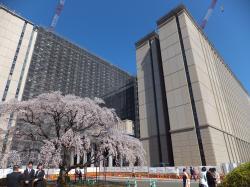 新総合教育棟と旅立ちの庭の桜