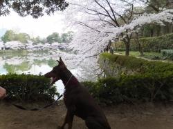 Brianna お散歩
