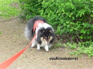 散歩2012.4.27
