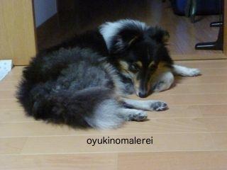 背後の愛犬2012.11