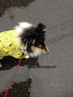 雨ザビエル2012.12