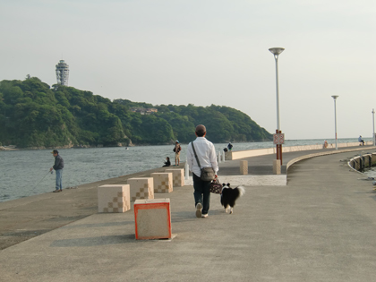 夕方散歩14