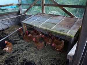 7鶏小屋卵を産む小屋
