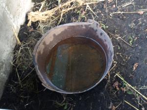 9鶏小屋水場