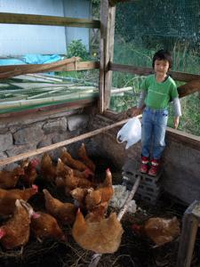 10鶏小屋初の餌やり