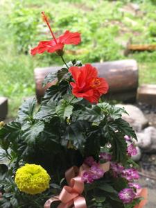 まさみちゃんからのお花