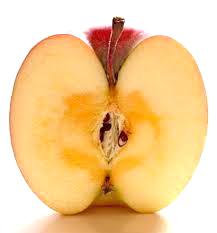 リンゴ断面図