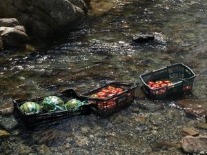親子合宿2011冷やされたスイカとトマト