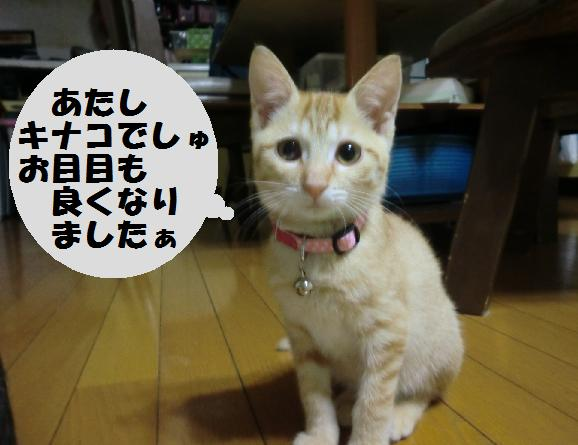 20121104_1キナコ