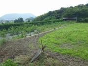 0708の庭 005