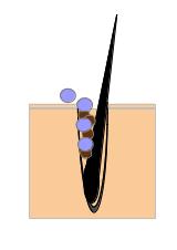 毛穴図(洗顔○1)