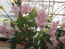 ぽりさん日記-お花