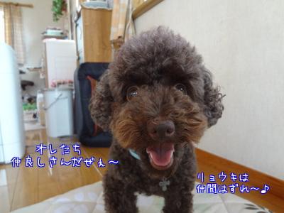 OrYm_tBCH5zydpp.jpg