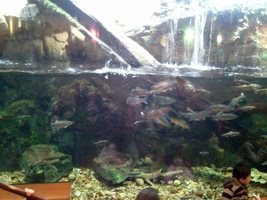 川魚たち!