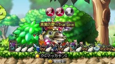Maple11867a.jpg