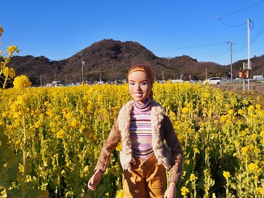 nanohana-20140119-02s.jpg