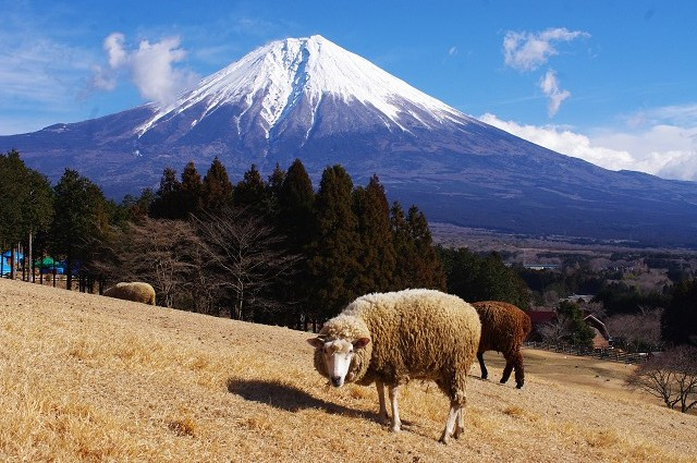 2012,90166羊②