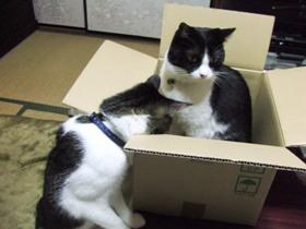 箱の中身はにゃんだろな