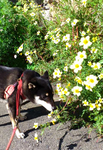 130105_flower.jpg