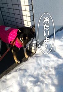 130115_yuki.jpg