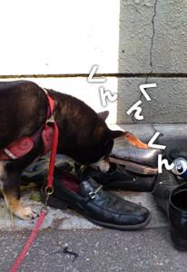 130401_shoes.jpg