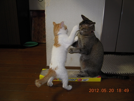くるみとソラ 073