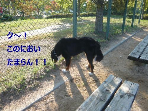 001+(2)_convert_20121031102005.jpg