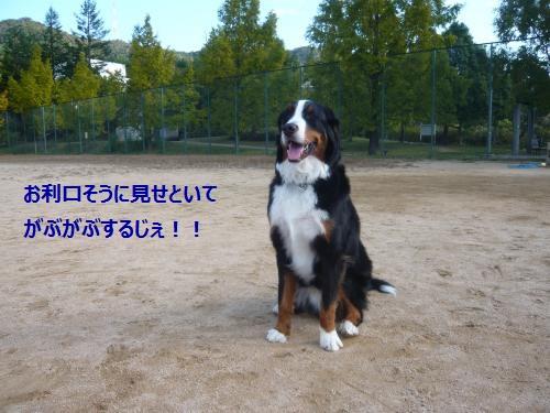 001+(3)_convert_20121106113554.jpg