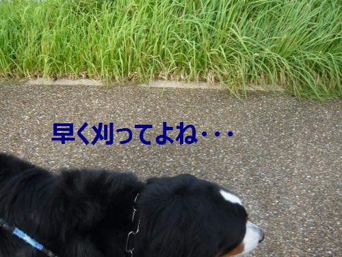 001_convert_20120910140005.jpg