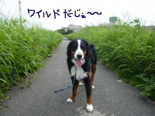 001_convert_20120911154538.jpg