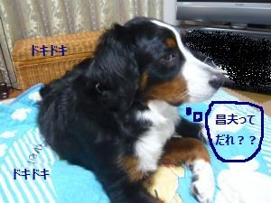 001_convert_20130118211510.jpg