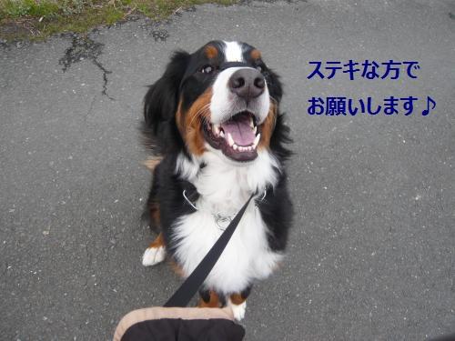 001_convert_20130215172651.jpg