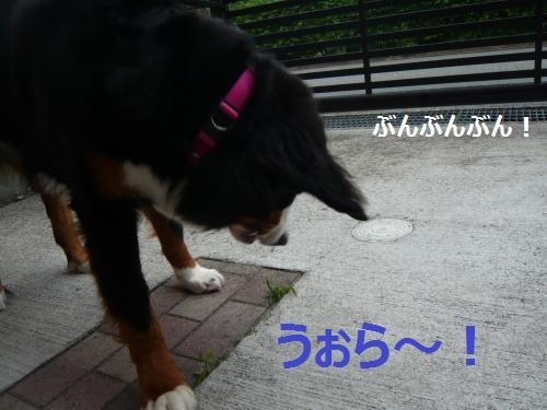 002_convert_20120608192316.jpg