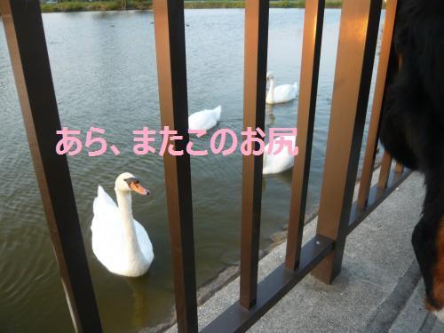 004+(2)_convert_20120913204300.jpg