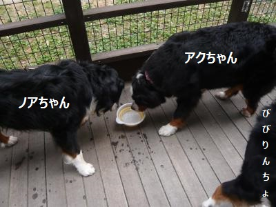 004+(4)_convert_20130619203104.jpg