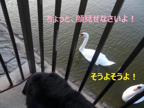 005+(2)_convert_20120913204345.jpg