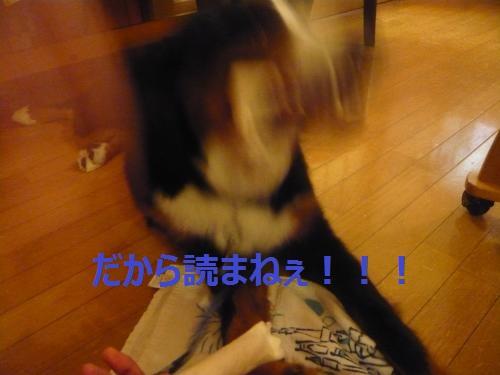 009_convert_20121204224616.jpg