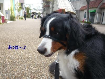 009_convert_20130402200216.jpg