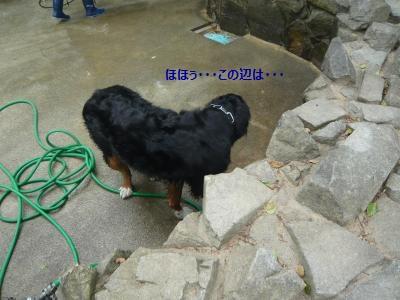 009_convert_20130619211207.jpg