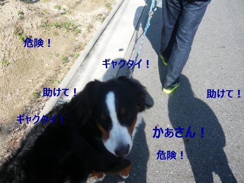 010_convert_20121106120332.jpg