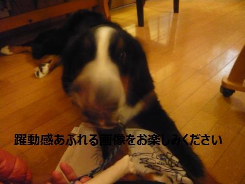 010_convert_20121204224801.jpg