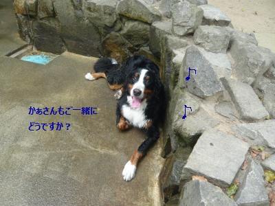 011+(3)_convert_20130619211435.jpg